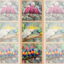 Wildlife Art 2 - 15inch Fabric Panel - Galah, Cockatoo, Parrots Multi by Devonstone