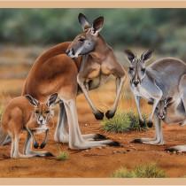 "Wildlife Art 3 Kangaroos 24"" (60cm) Fabric Panel by Devonstone"