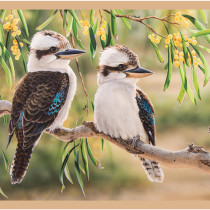 "Wildlife Art 3 Kookaburras 24"" (60cm ) Fabric Panel by Devonstone"