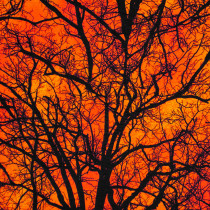 Raven Moon Spooky Trees Orange by Robert Kaufman Fabric