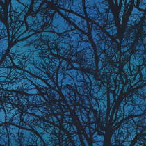 Raven Moon Spooky Trees Blue by Robert Kaufman Fabric